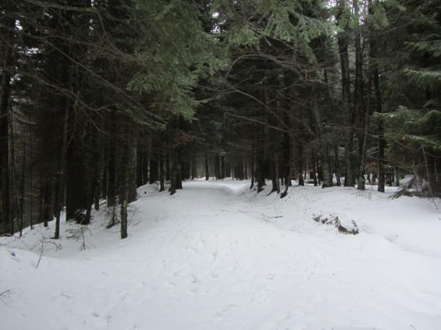 valea alba iarna (1)